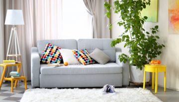 Najlepšie izbové rastliny, ktoré čistia vzduch